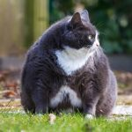 Cat Obesity And Health Problems On The Rise: Are You Over-Feeding Your Pets?