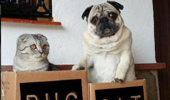 Luigi The Cat And Bandito The Pug: Unlikely Pair Enjoys The Great Outdoors