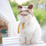 Grumpy Cat On a Mission: Himalayan Cat And Toddler Want To Bring Happiness To The World