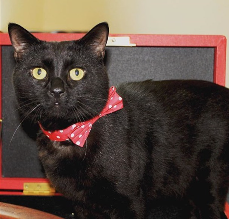 Treasury Cat Gladstone Thrilled To Serve Queen Elizabeth: Friendlier Than Larry and Palmerston