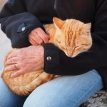 Why Do Cats Purr: Veterinarian Explains Felines May Be Stressed Or In Pain