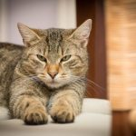 When Should Your Cat Be Spayed Or Neutered?