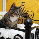 Longcroft Luxury Cat Hotel: Make A Reservation To Pamper Your Favorite Feline