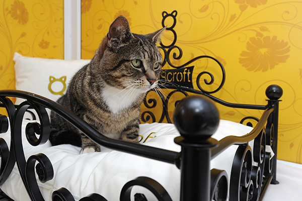 Longcroft Luxury Cat Hotel: Make A Reservation To Pamper Your Favorite Feline