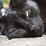 Signs Your Cat May Be Suffering From Heat Stroke