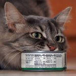 Is It Safe To Feed Your Pet Cat Canned Tuna?