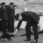 Famous Feline War Heroes: Five Famous Cats Who Served In The Military