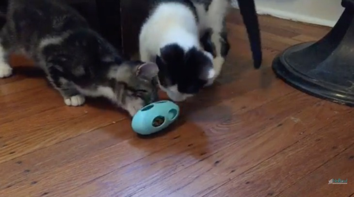 Cats Control When They Eat: Veterinarian Designed The NoBowl Feeding System™ Now Available