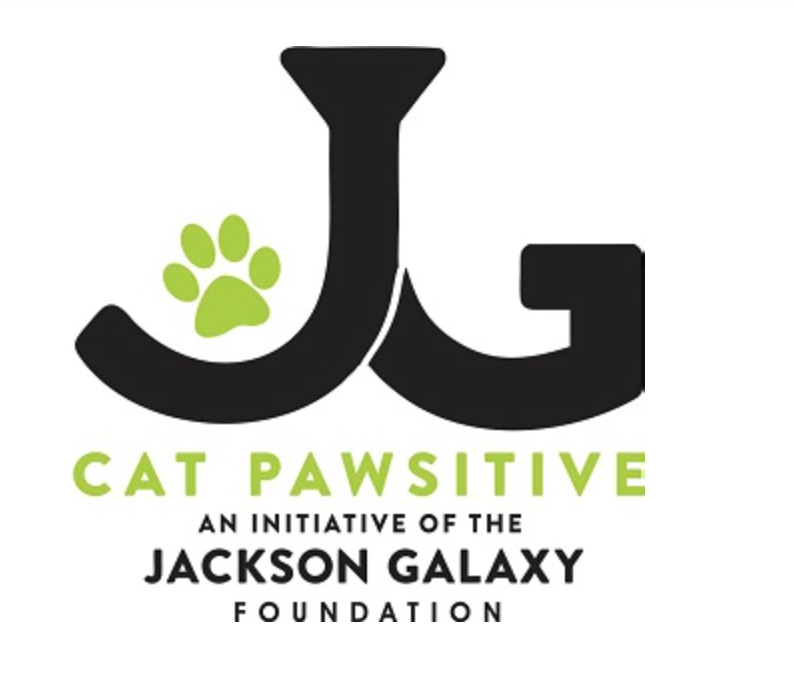 Cat Pawsitive Founded By Jackson Galaxy: Initiative Helps Shelter Cats Become Easily Adoptable