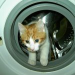 Cat Naps In Washing Machine – Survives Spin Cycle – Nominated for Pet Survivor Award