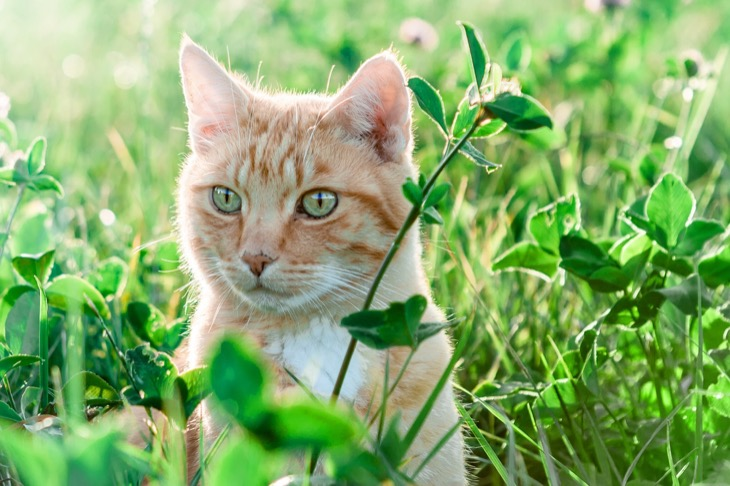 What Feline Owners Need To Know About Cats Eating Grass, Plants And Vegetables