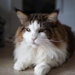 Samson, The Fattest Cat In NYC Weighs In At 28 Pounds And Has More Instagram Followers Than You!