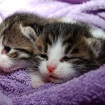 5 ways To Find Your Kittens A Home Without Taking Them To A Shelter