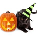 DIY Halloween Costumes for Your Cat