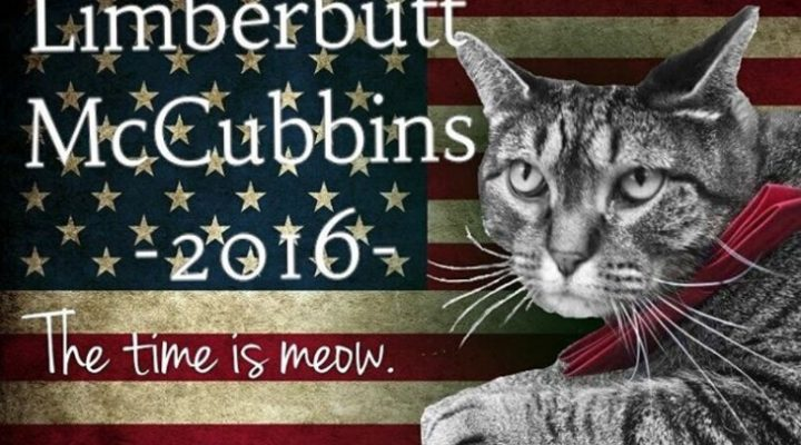 Limberbutt McCubbins Enters 2016 Presidential Race – And He's A Cat!