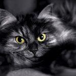 Is Halloween Dangerous For Black Cats?
