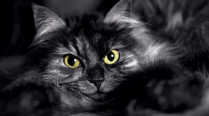 Is Halloween Dangerous For Black Cats?