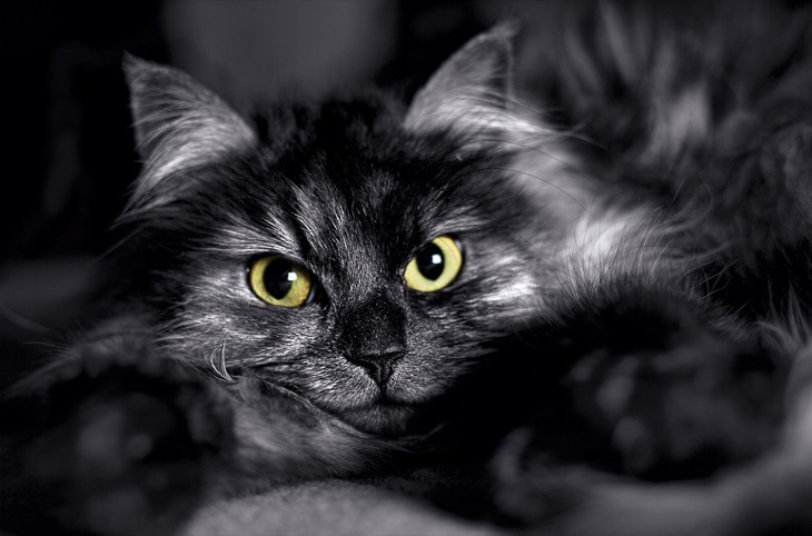 cat-1364253_1280