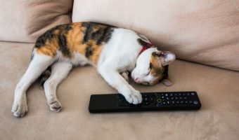 There's a New 24/7 TV Channel Devoted to Cats