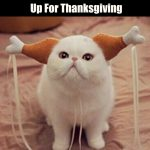 How To Dress Your Cat Up For Thanksgiving