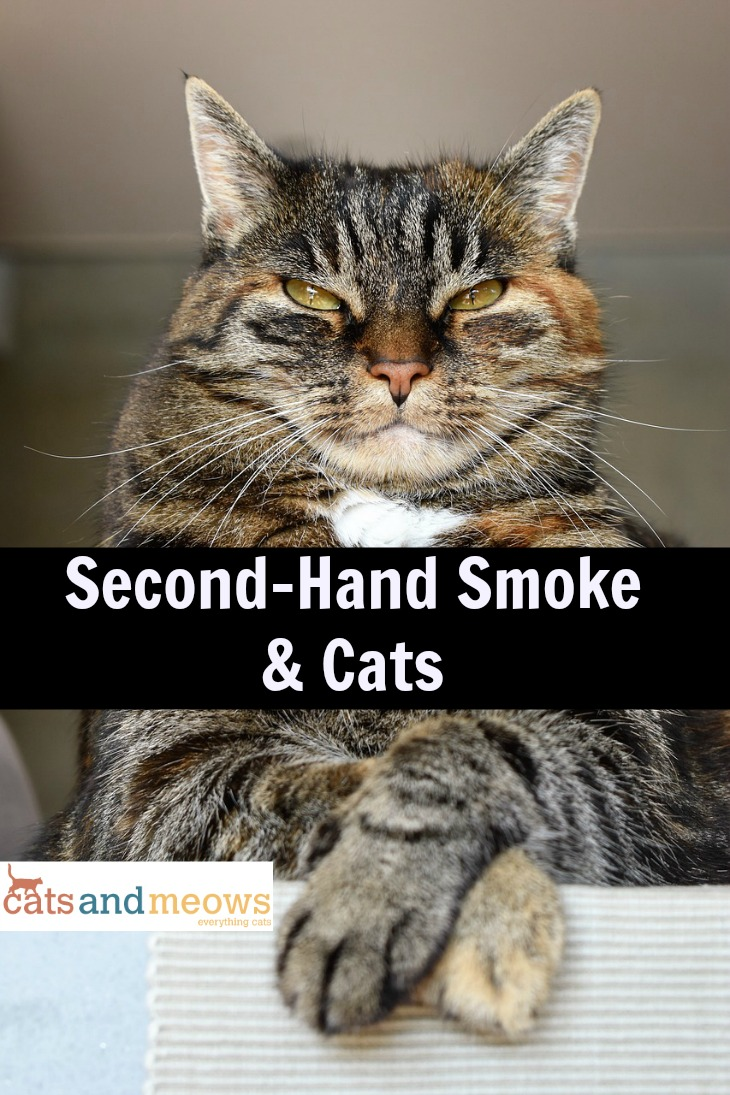 Second Hand Smoke and Cats
