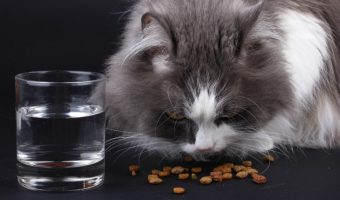What to Feed Your Cat if They Have Food Allergies