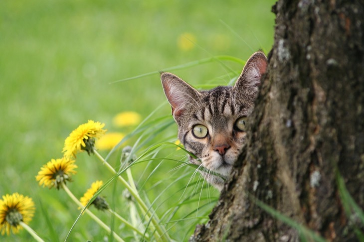 Is It Safe For Cats To Eat Bugs?