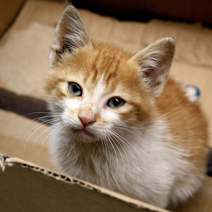 Cat Subscription Boxes – Give Your Cat The Gift That Keeps On Giving