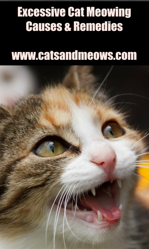 Causes and Remedies of Excessive Cat Meowing