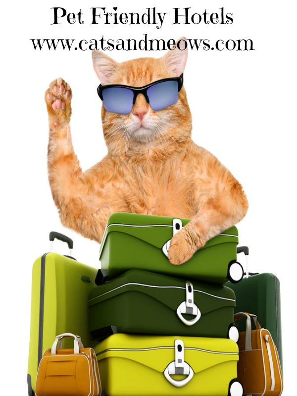 Traveling With Your Cat - Try These Pet Friendly Hotels