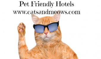 Traveling With Your Cat – Try These Pet Friendly Hotels
