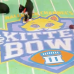 The Hallmark Kitten Bowl Returns February 5, 2017