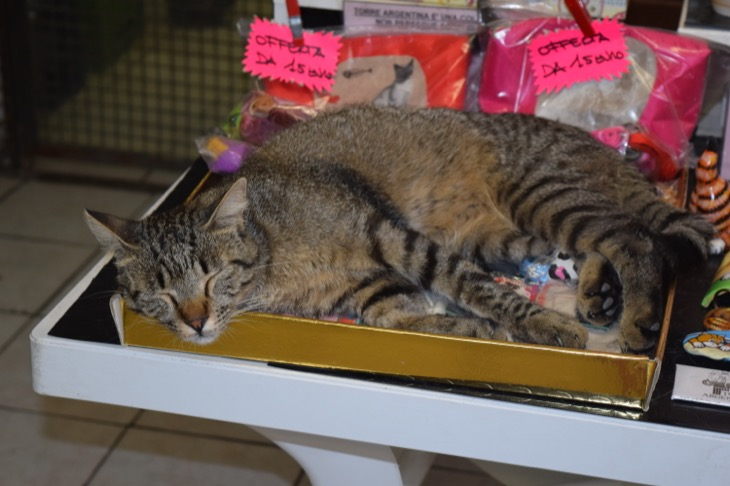 The Cats Of Torre Argentina Cat Sanctuary In Rome