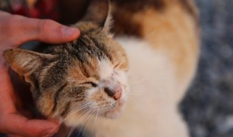 Ways To Tell If Your Cat Really Loves You – Details Here!