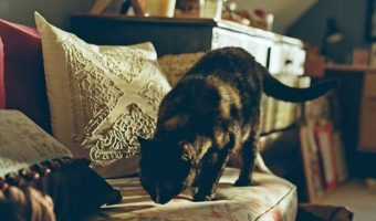 Tips For Keeping Cats Off Furniture and Other Areas