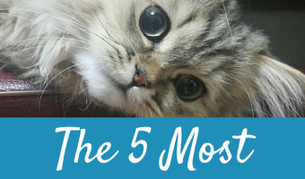 The Most Expensive Cats To Own – Their Cost and Their Ongoing Needs