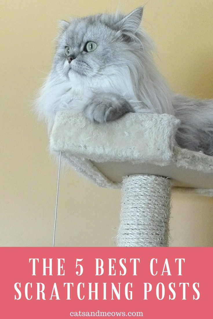 The 5 Best Cat Scratching Posts