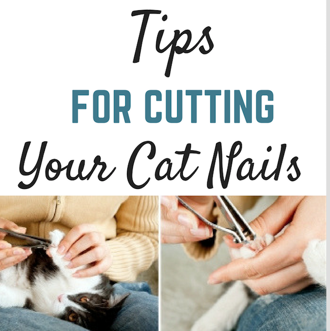Tips For Cutting Your Cat's Nails