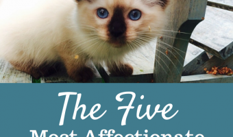 The 5 Most Affectionate Cat Breeds
