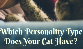 Which Personality Type Does Your Cat Have?