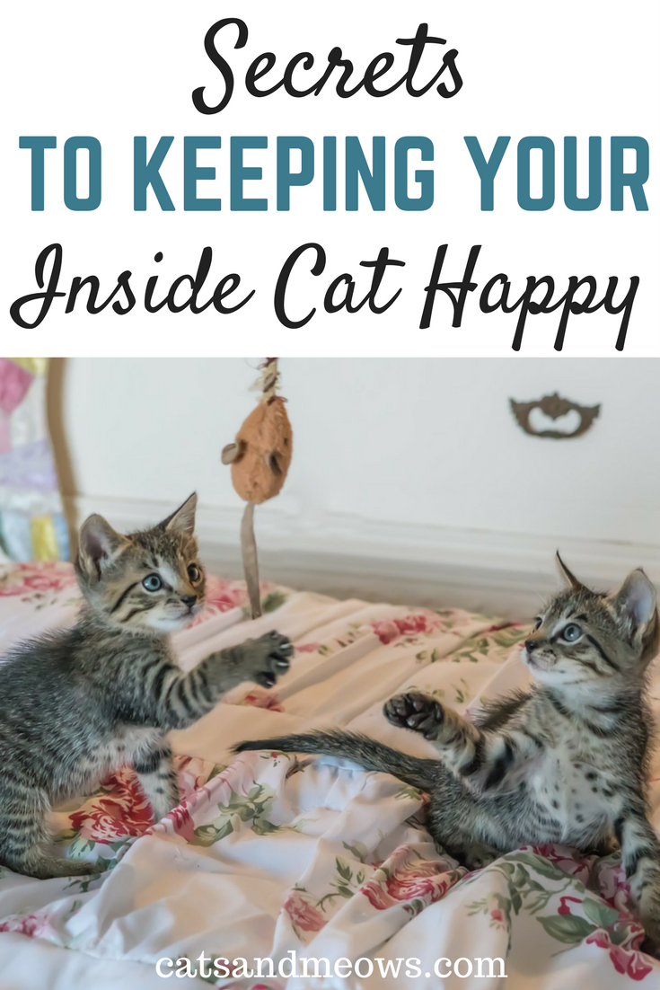 Secrets To Keeping Indoor Cats Happy