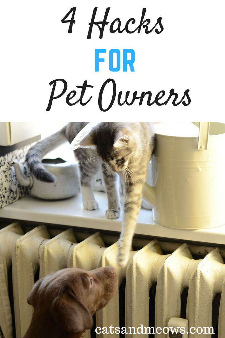 Best Hacks for Pet Owners