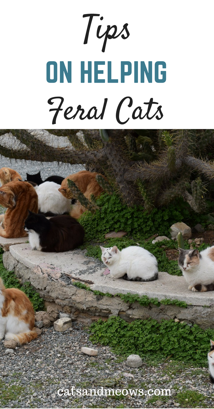 How To Help Feral Cats - The Ways You Can Help our Homeless Furry Friends