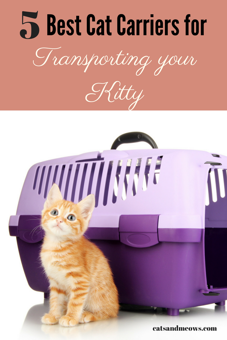 The Best Cat Carriers for Transporting your Kitty