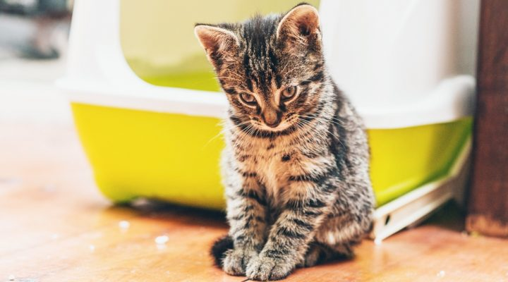5 Reasons Your Cat's Avoiding their Litterbox