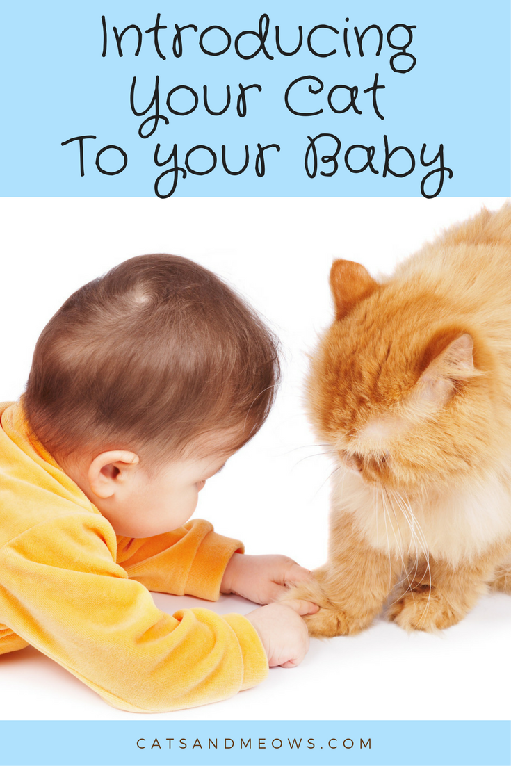 Introducing Your Cat to Your New Baby
