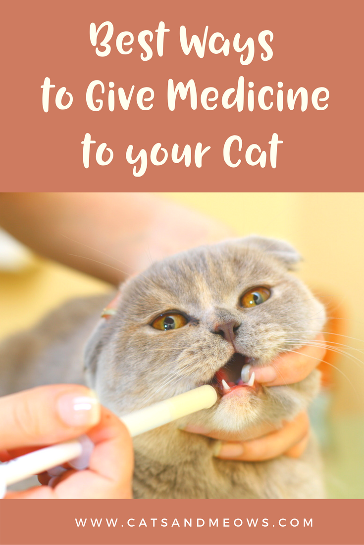 The Best Ways to Give Medicine to your Cat