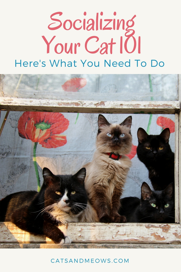 Socializing Your Cat 101: Here's What You Need To Do