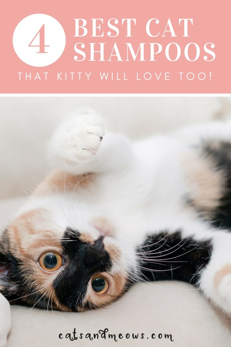 The 4 Best Cat Shampoos that Kitty Will Love Too!