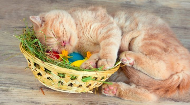 Cat Easter Basket: Ideas For Filling Your Kitty's Basket